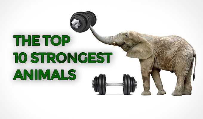The-top-10-strongest-animals
